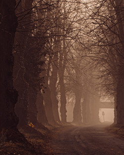 Highly Commended: Misty Trees - Vicky Dyson