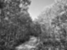 ForestBW.jpg