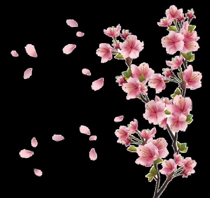 Spring%2520Floral_edited_edited.png