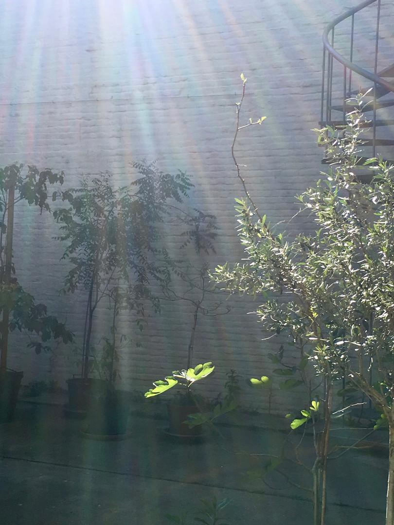 studiomie morning sunshine
