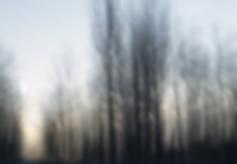 La luce che filtra tra il mosso degli alberi
