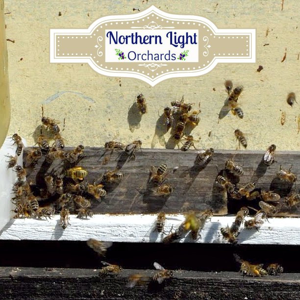 spring bees.jpg