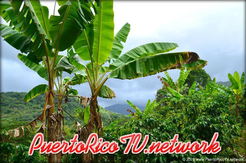 PuertoRicoTVnetwork.jpg