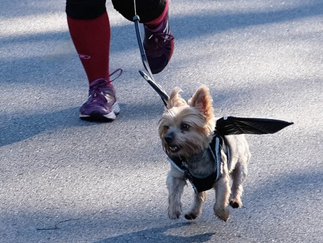 It's A Ghostly Virtual 4th Annual HOWLING 3K Fun Run And Dog Walk