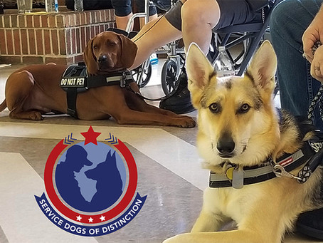 The Arkansas CW launches new web series Service Dogs of Distinction.