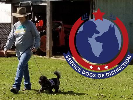 Army Veteran Sheri Nodine Talks About the Service Dogs of Distinction Program