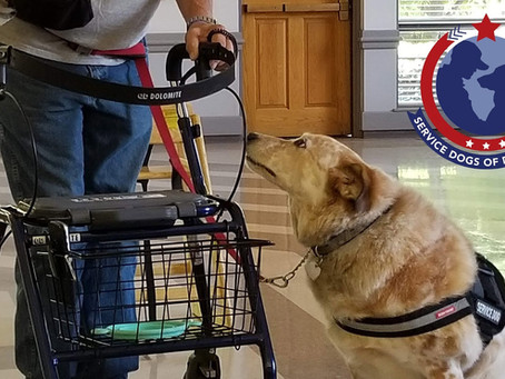 Board member speaks about the program that Service Dogs Of Distinction provides for veterans.