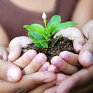 Seedling plant of hope