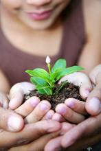 Botany & Plant Lifecycle