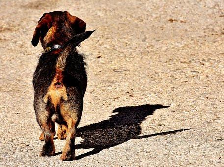 brown dog path Alexa Photos Pixabay