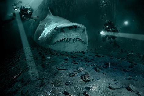 shark-5782766_1920.jpg