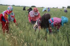 afghan women working fields world bank