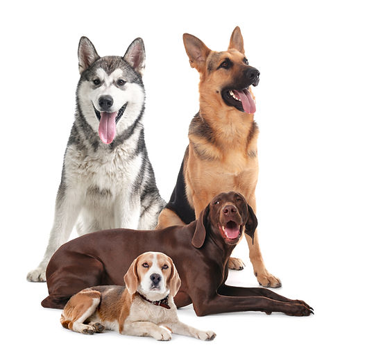 Group of different dogs on white backgro