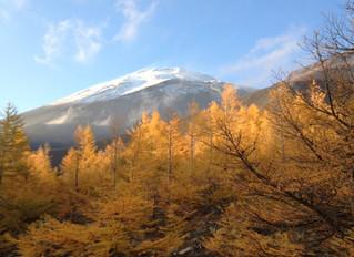 富士山麓・秋の黄葉紅葉コース
