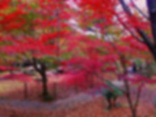 天城山の紅葉:伊豆の踊子がたどった道を歩き、小説中にも出てくる福田屋にて入浴!!最後は海鮮丼を食すツアー!!「伊豆の踊子コース」なら自遊舎まで!!