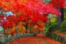 web_ImageView3.jpg