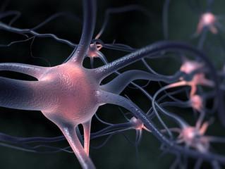 Les performances du cerveau évoluent avec l'âge, mais ne déclinent pas (article du Temps)