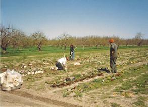 Planting-Poppys.jpg