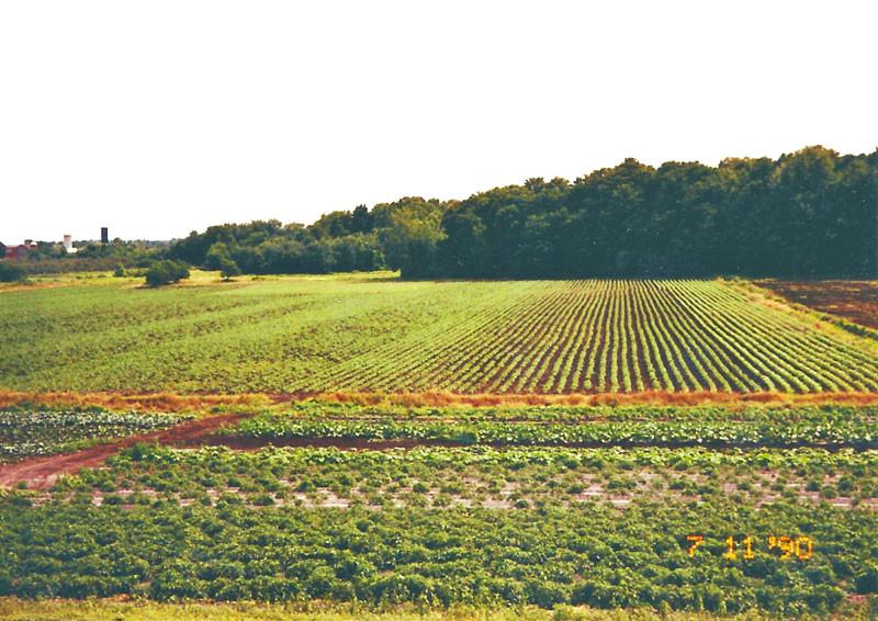 Mason Farms 1990