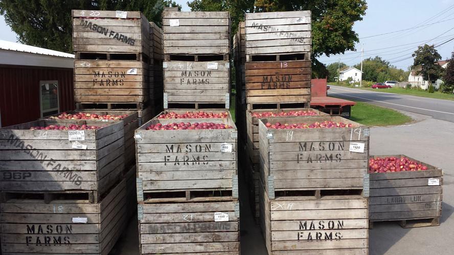 Mason Farm apples