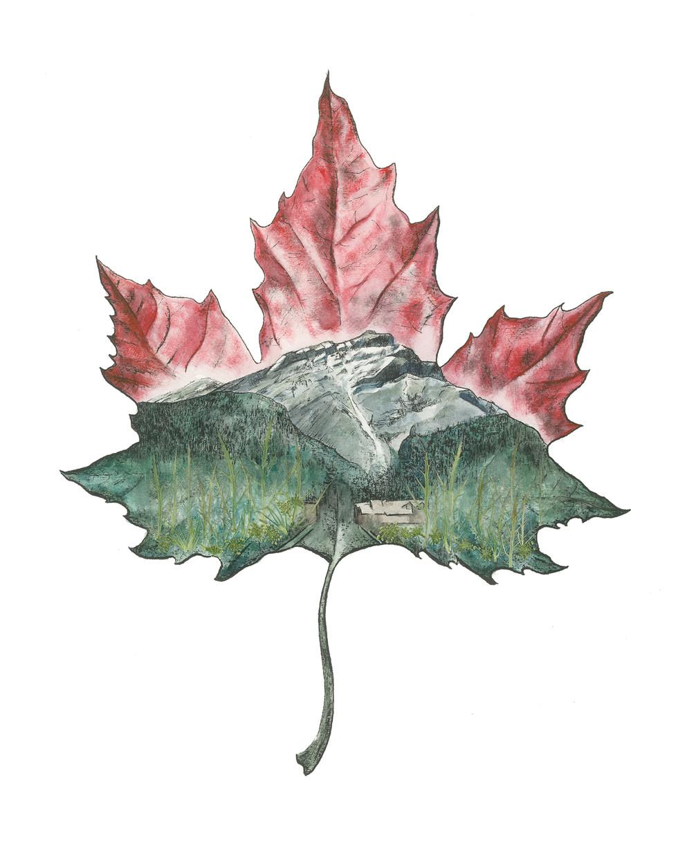 Maple Cascade