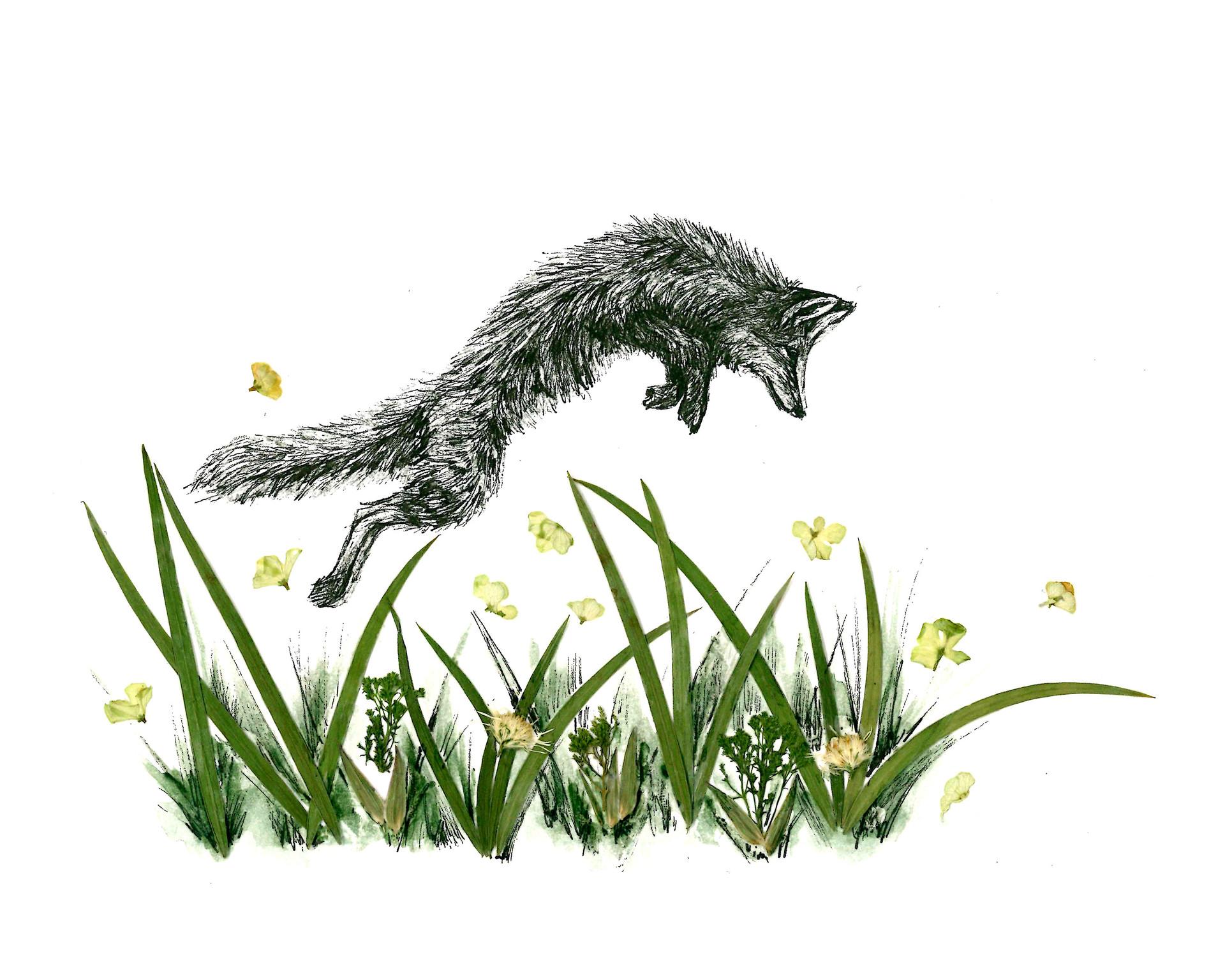 Jumping Fox