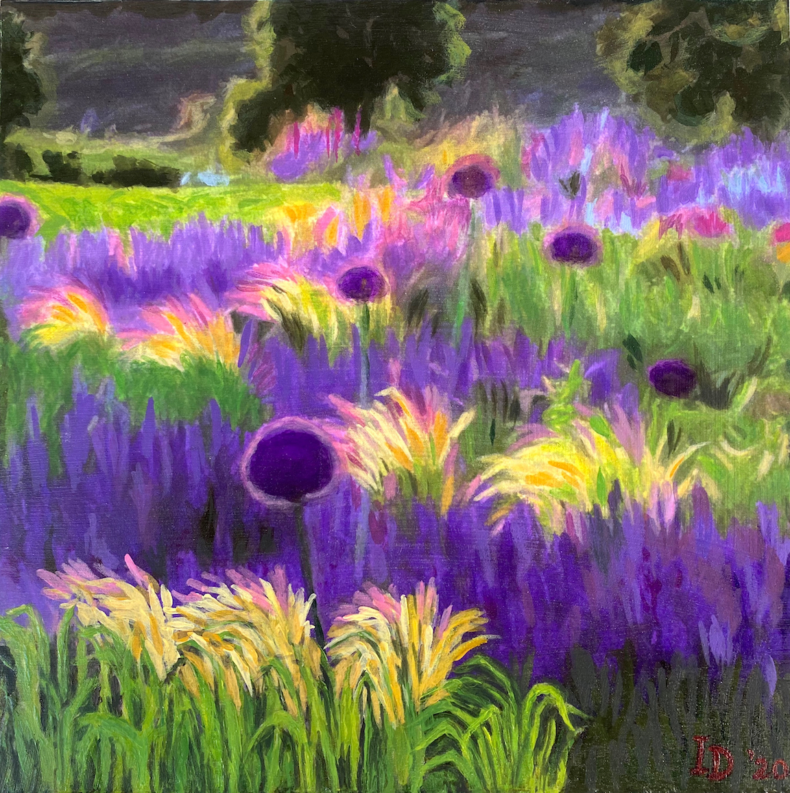 Lavender and Allium Field I