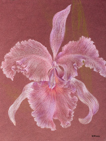 Orchid Series, No. 2 Colored Pencil 1996