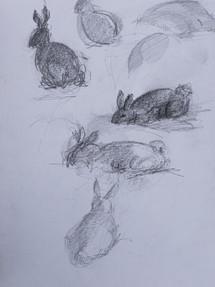 Rabbit Foraging Pencil Sketch 1998