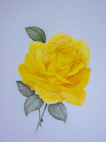 A Yellow Rose Acrylic on Paper 2009