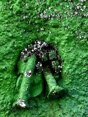 Green Nail Study, NJ, 2020