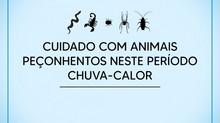 Combinação chuva e calor é propícia para registro de animais peçonhentos