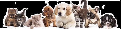 Plano de saúde para cães e gatos