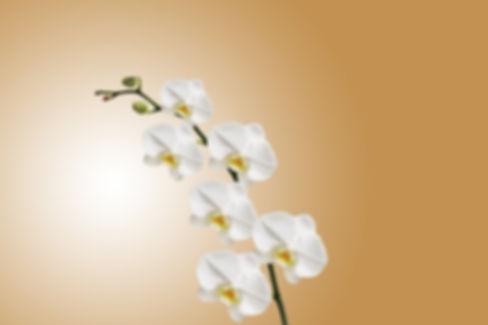 flower-743373_960_720.jpg