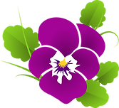 pansy-427139_1280.png