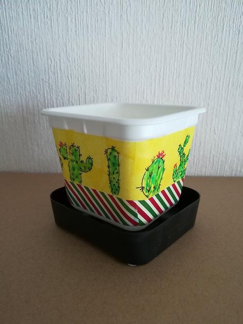 Kit plantes Mexico S