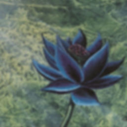black lotus_edited_edited.jpg