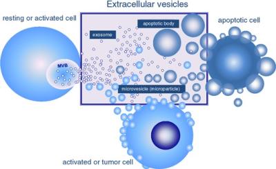 exosomes-extracellular_vesicle_types.png