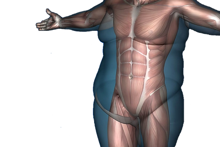 body-fat-proportion.png