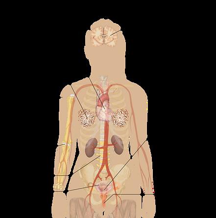 800px-Symptoms_of_menopause_(vector).svg