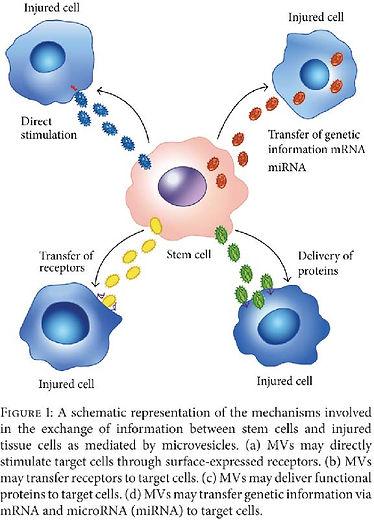 exosomes-book.jpg