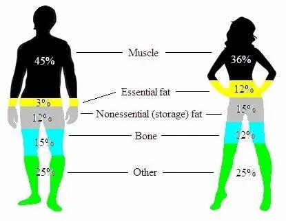 body-composition, men vs women.jpg
