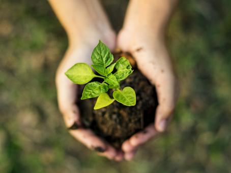Innovation Makes Us Sustainable
