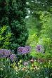 erda-estremera-flowers