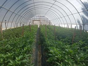 Lattin Farms Hoop House