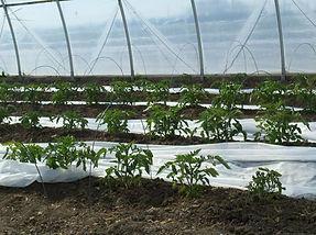 Lattin Farms Hoop House 6.jpg