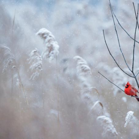 Snow White Visits Highland