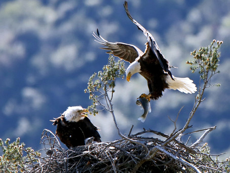 Flee To The Mountains thru Eagle's Nest Institute.