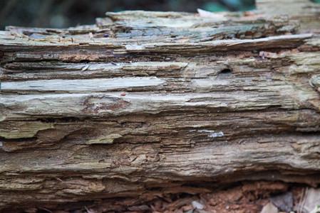 retir de banys de bosc