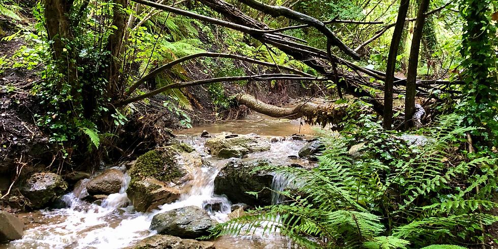 Baño de Bosque Montnegre i el Corredor